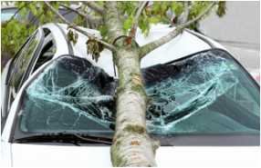 Photo of a tree branch fallen on a car
